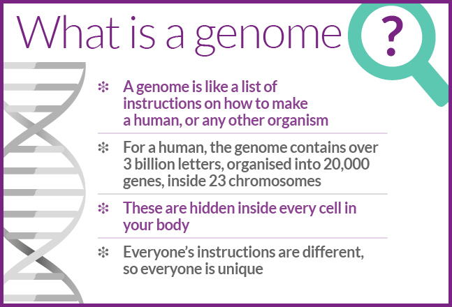A genome is like a list of instructions on how to make a human.